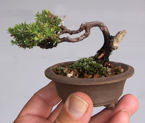 Mini-bonsai-just3ds.com-3